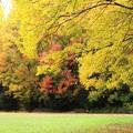 写真: 里の秋ー2