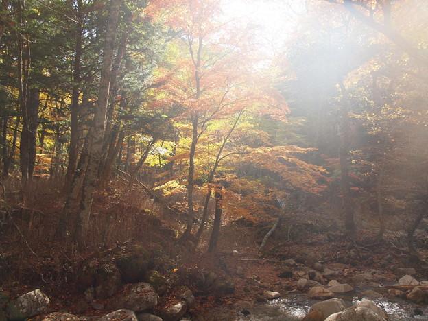 照葉峡の秋ーB