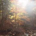 写真: 照葉峡の秋ーB