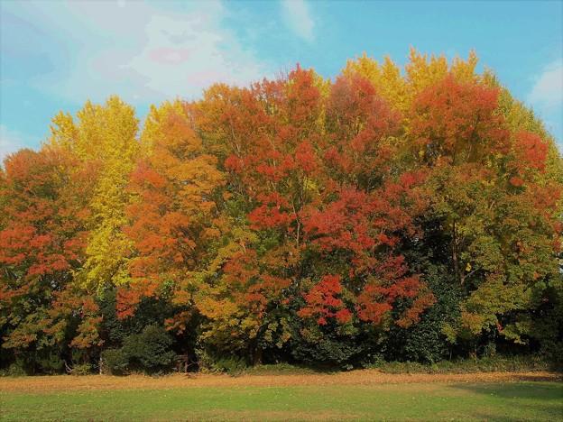 里の秋-1