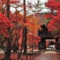 写真: 平林寺にも秋が