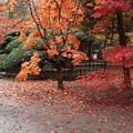 写真: 平林寺にも秋がー2