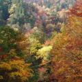 写真: 山紅葉