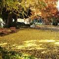 写真: 公園の秋