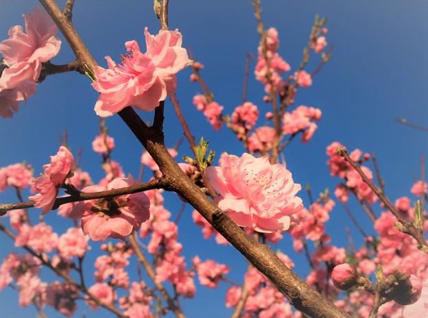 いつもの散歩道「春うらら」