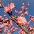 Photos: いつもの散歩道「春うらら」