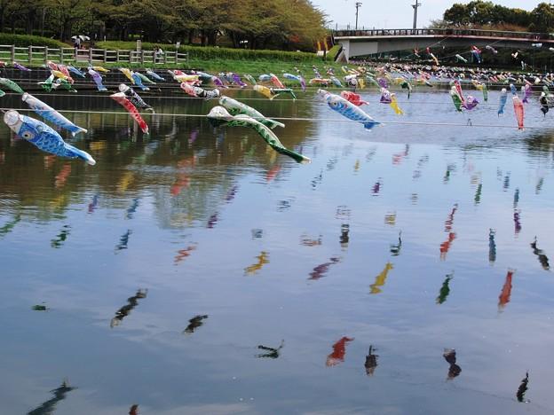 川に泳ぐ鯉のぼり