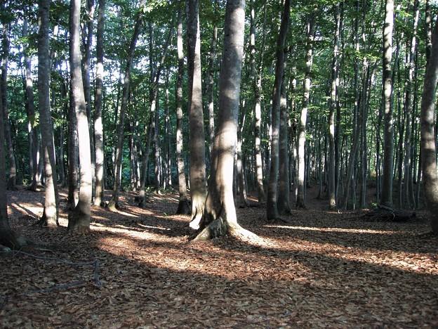 美人林の夏
