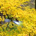 Photos: 渓谷の秋