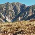 晩秋の立山とチングルマ