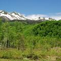 Photos: 新緑と乗鞍岳