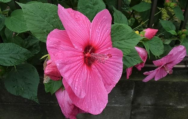 お隣さんに咲く花ー2