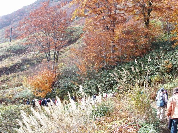 秋の登山道