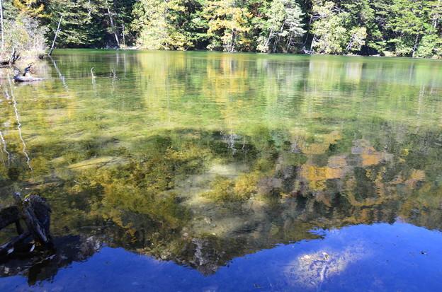 秋の明神池