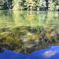Photos: 秋の明神池