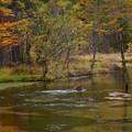 秋の田代池に野猿が