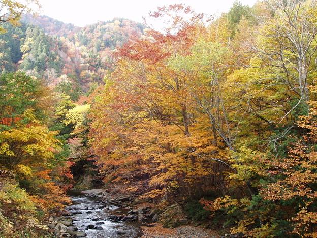 照葉峡の秋