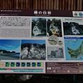 Photos: 男鹿・椿漁港・グリーンタフ 16-09-19 16-31