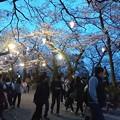 Photos: 2018 秋田千秋公園 夜桜 08