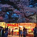 Photos: 2018 秋田千秋公園 夜桜 12