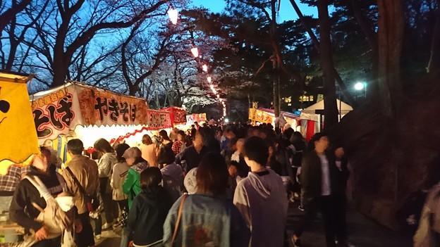 2018 秋田千秋公園 夜桜 16