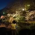 2018 秋田千秋公園 夜桜 19