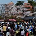 千秋公園の桜 2018-04-22_11