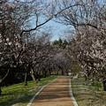 Photos: 小泉潟公園 フォト蔵用 2018-04-21_1