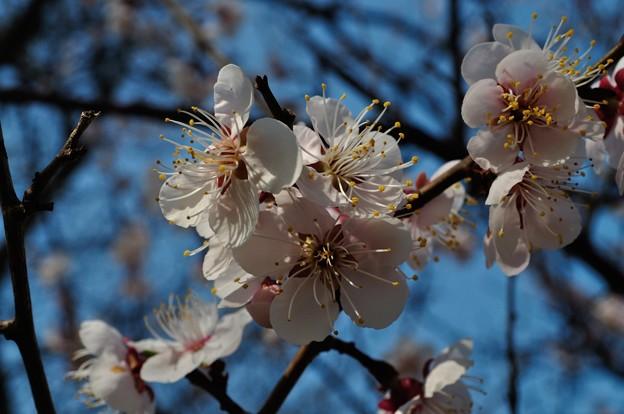 小泉潟公園 フォト蔵用 2018-04-21_2