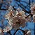 写真: 小泉潟公園 フォト蔵用 2018-04-21_2