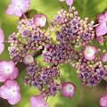 Photos: 『花のまわりで』♪