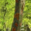 Photos: 何の木か、わかりますか~♪