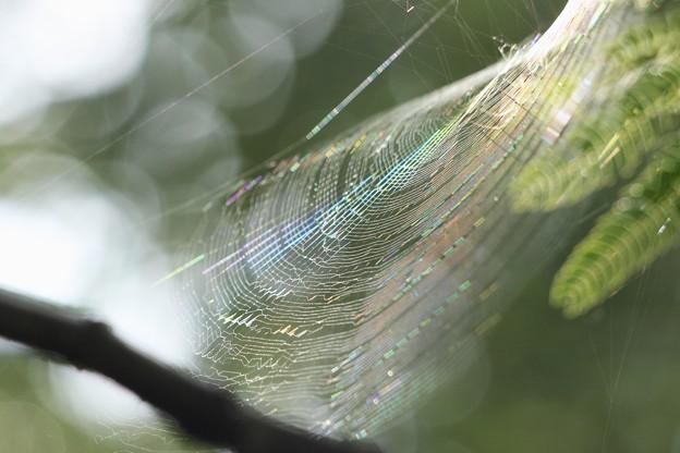 虹糸の紡ぐ音~♪