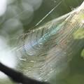 写真: 虹糸の紡ぐ音~♪