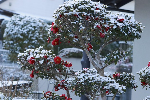 今日の朝の雪景色~♪