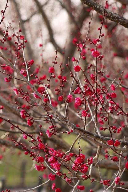 赤い花~♪