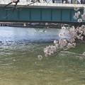 Photos: 花筏~♪