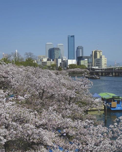 まだまだ桜~♪