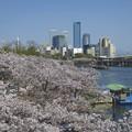 Photos: まだまだ桜~♪