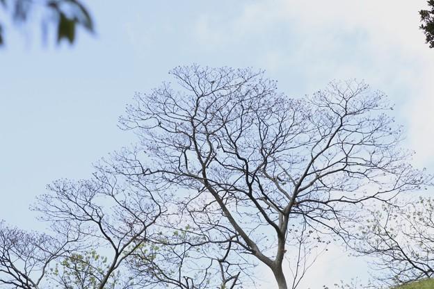 1.遠くに見える大きな木~♪