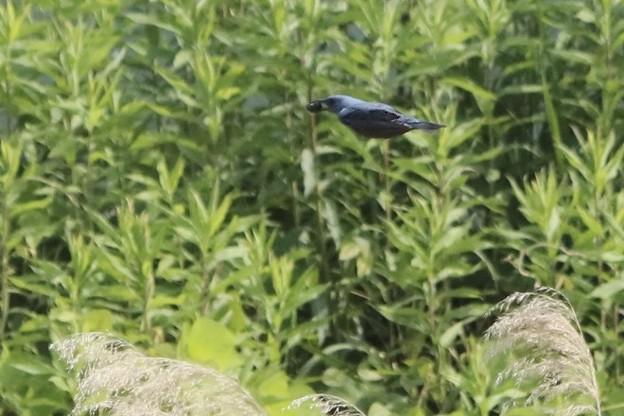 青い鳥~♪