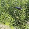 写真: 青い鳥~♪