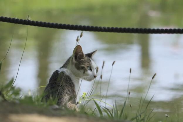写真: 池のほとり~♪