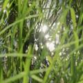 Photos: 田圃の光景2~♪