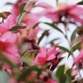 かくれんぼ~花の中~♪