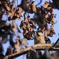 Photos: 立ち枯れのコナラの木の枝で~♪