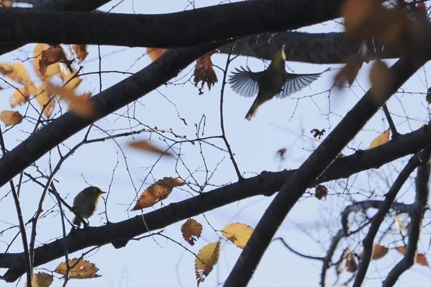 Photos: ジャンプ~上へ~♪