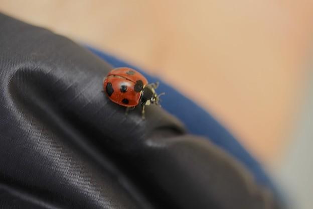 てんとう虫~登山中~♪