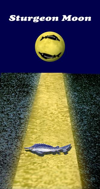 Sturgeon Moon~♪