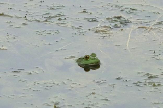 カエルさん~♪